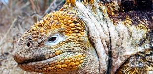 Wildlife of the Galapagos Islands