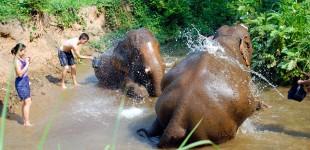 Thailand Jungle Adventures