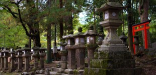 Mainland Japan: Tokyo & Nara