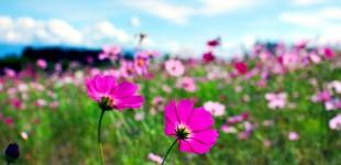 A Nature Lover's Paradise: Hokkaido